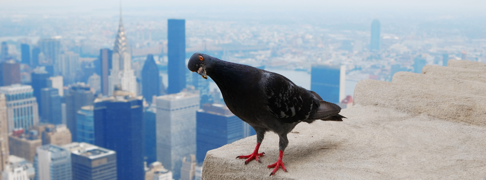 How can birds damage your building's roof